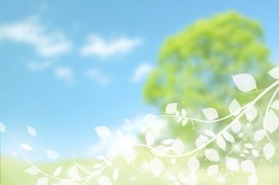 木と草原の風景