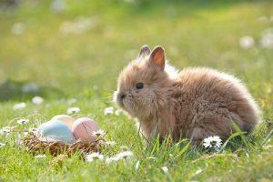 草原にいる子ウサギ