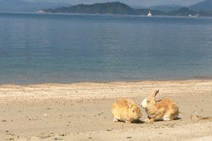 海岸にいるうさぎ