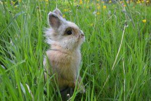 草原にいるうさぎ