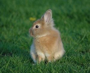 ミニウサギの大きさは?知っておきたい性格の特徴、飼い方