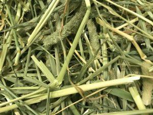 うさぎに与える牧草の種類には何がある?1番刈り~3番刈りとは?