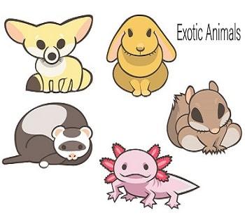 エキゾチックアニマルって何?うさぎの動物病院を探すなら