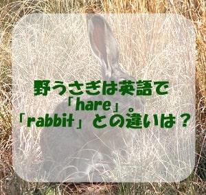 野うさぎは英語で「hare」。「rabbit」との違いは?